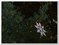 Slavnostní rozsvícení vánočního stromu