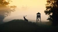3. místo - Vladimír Šálek, Břeclav, Král lužního lesa